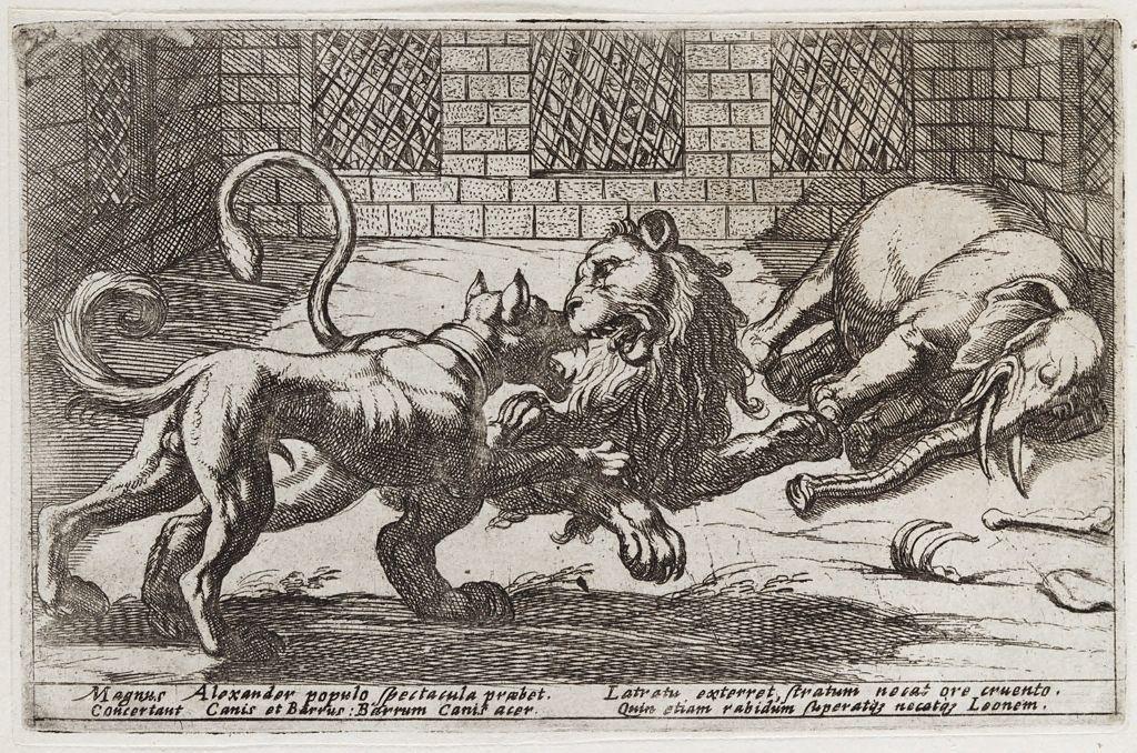 16th century representation of Alexander's dog