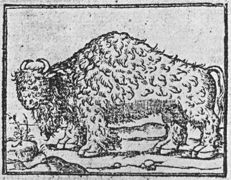 First known depiction of a buffalo, 1554. National Parks Service.